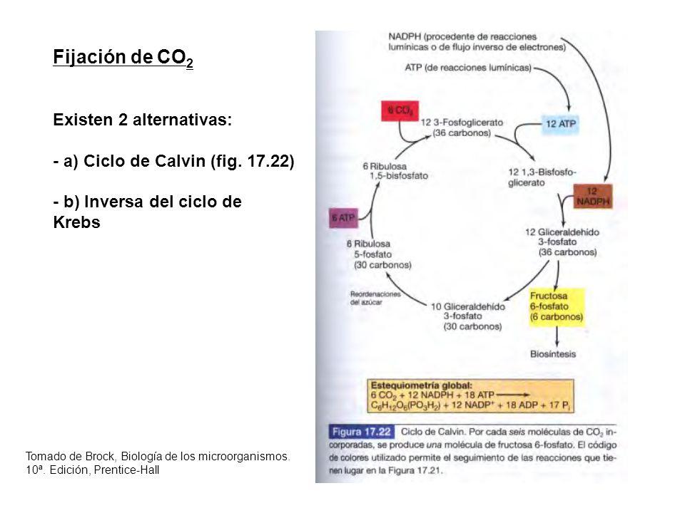Fijación de CO2 Existen 2 alternativas: