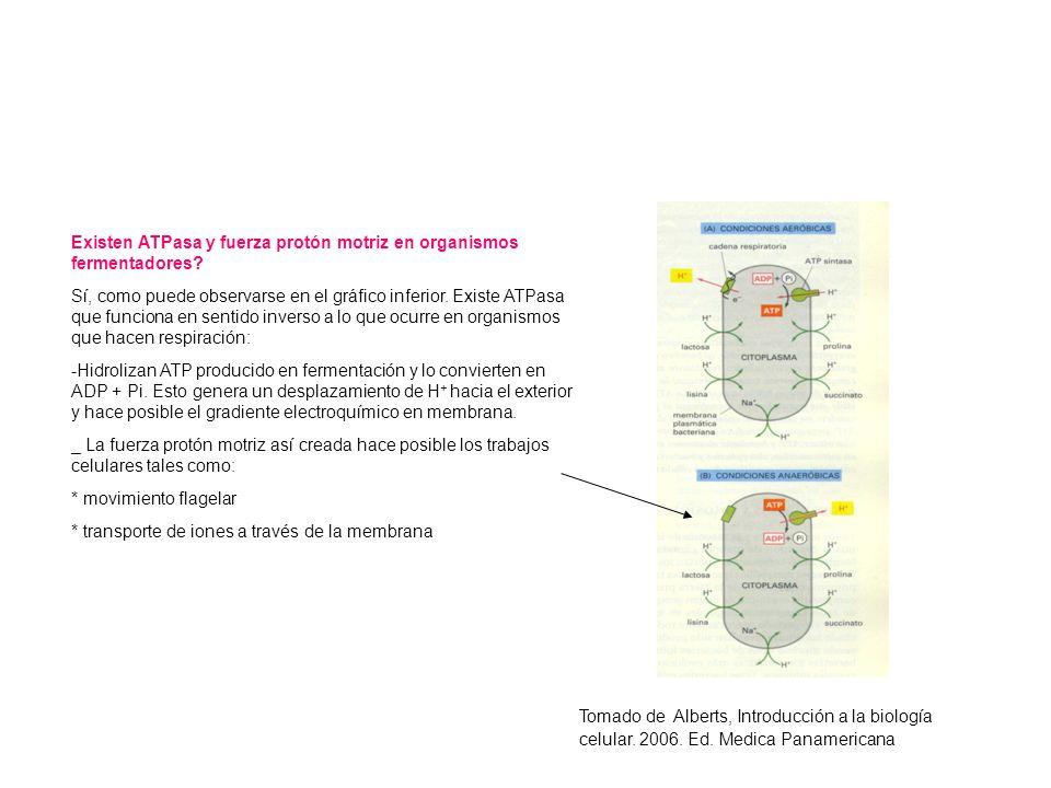 Existen ATPasa y fuerza protón motriz en organismos fermentadores