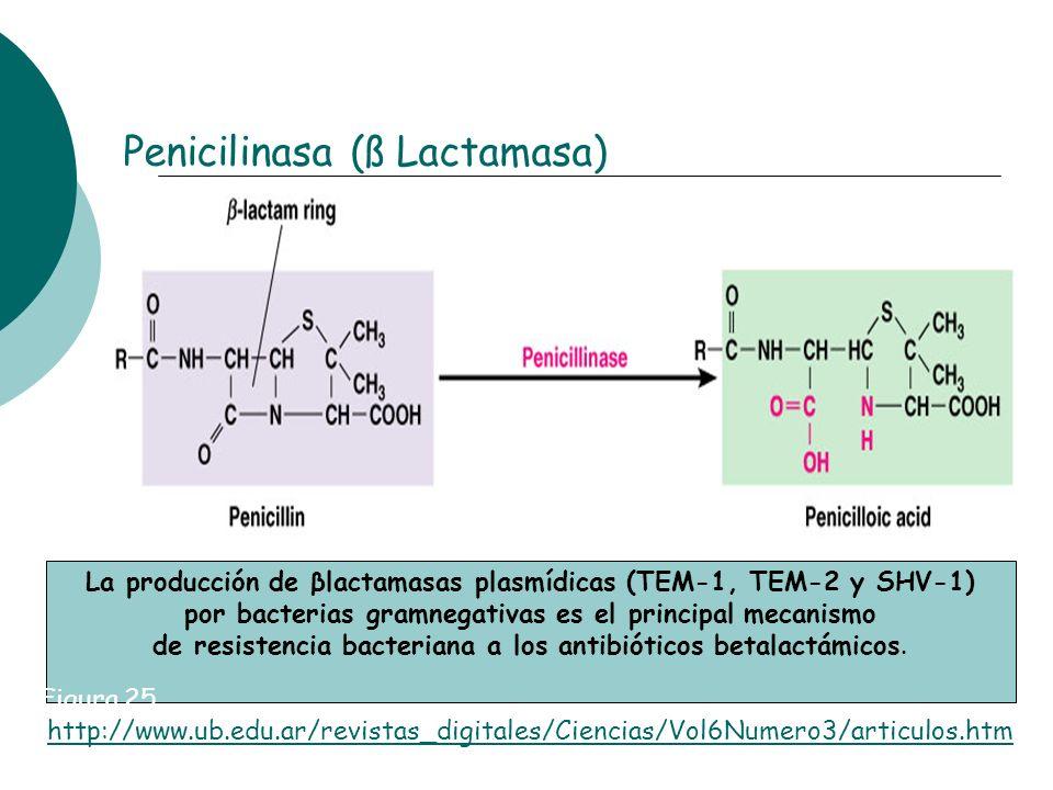 Penicilinasa (ß Lactamasa)