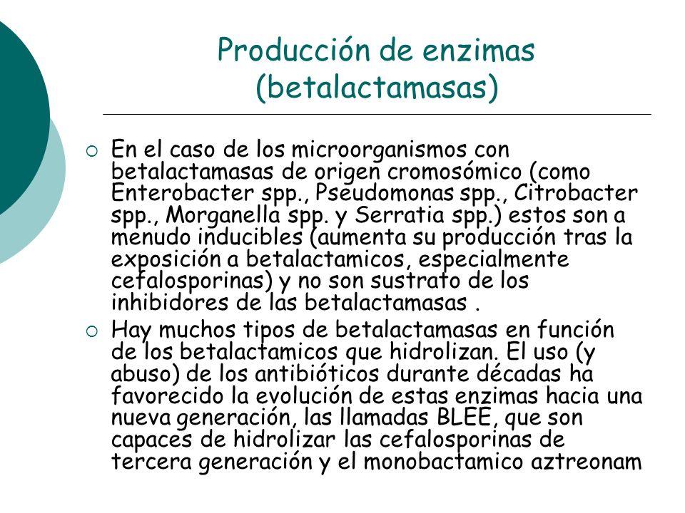 Producción de enzimas (betalactamasas)