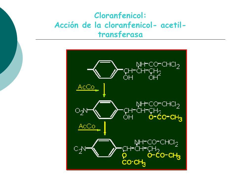 Acción de la cloranfenicol- acetil- transferasa