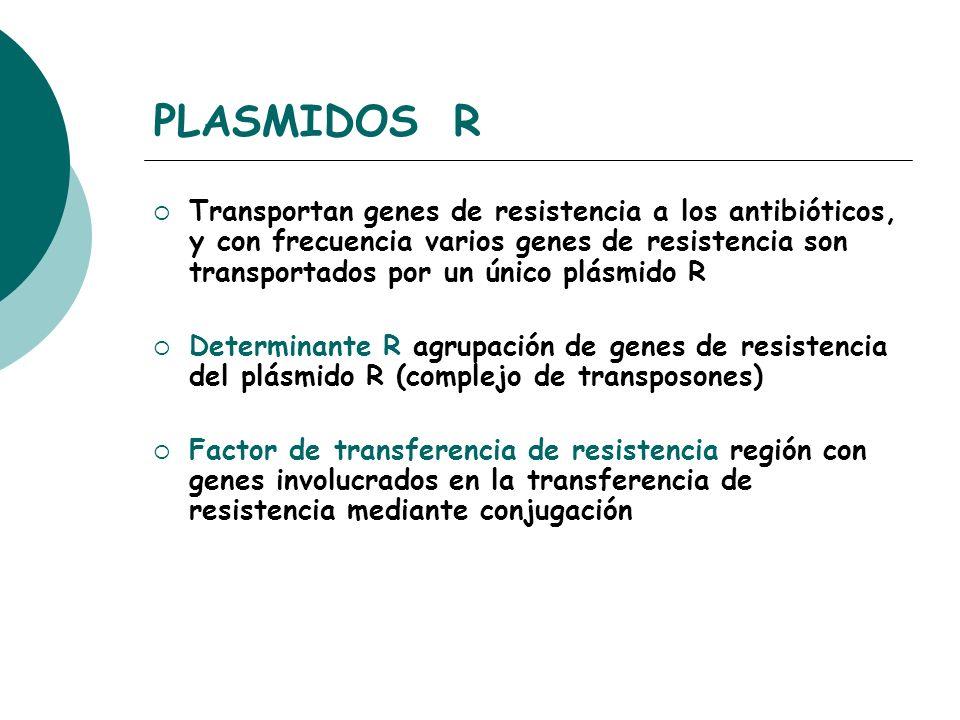 PLASMIDOS R