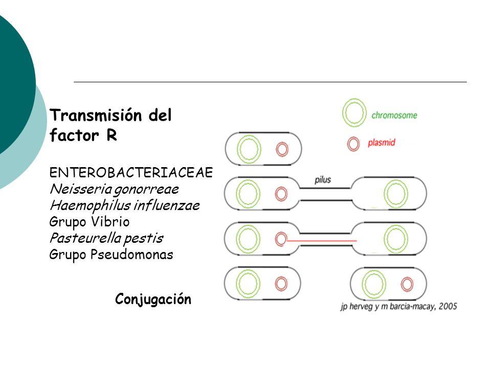Transmisión del factor R