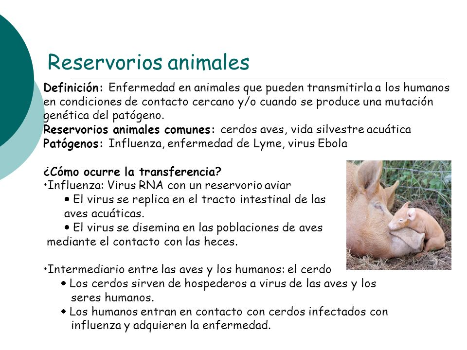 Reservorios animales
