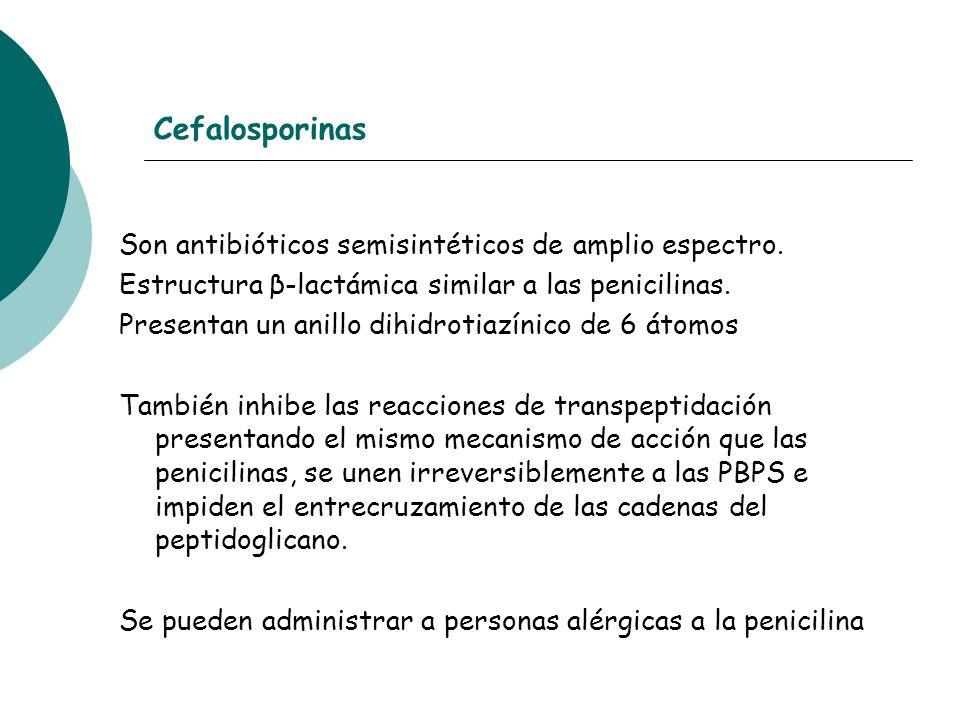Cefalosporinas Son antibióticos semisintéticos de amplio espectro.