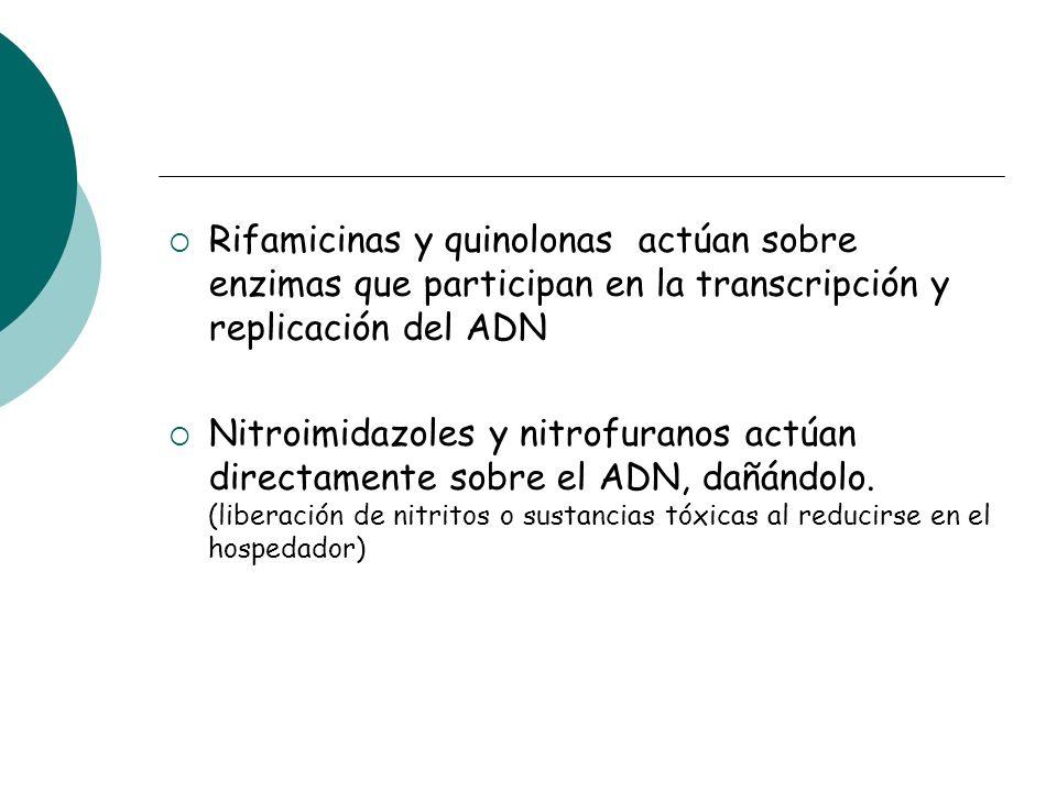 Rifamicinas y quinolonas actúan sobre enzimas que participan en la transcripción y replicación del ADN