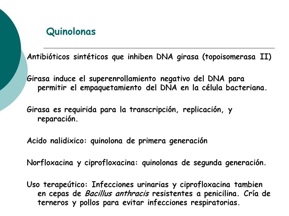 Quinolonas Antibióticos sintéticos que inhiben DNA girasa (topoisomerasa II)