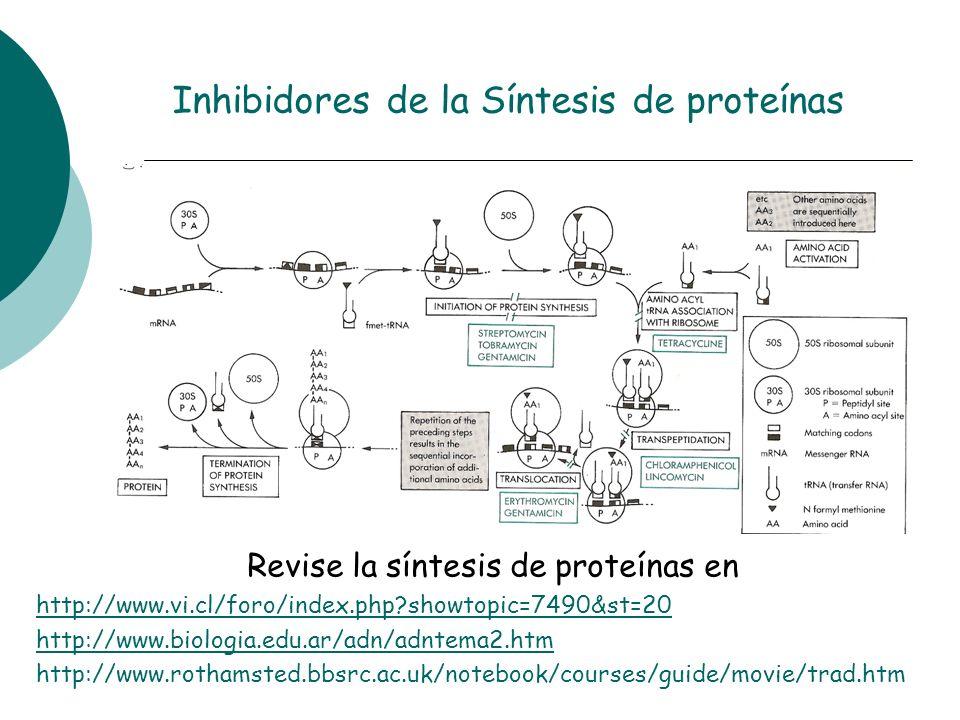Revise la síntesis de proteínas en