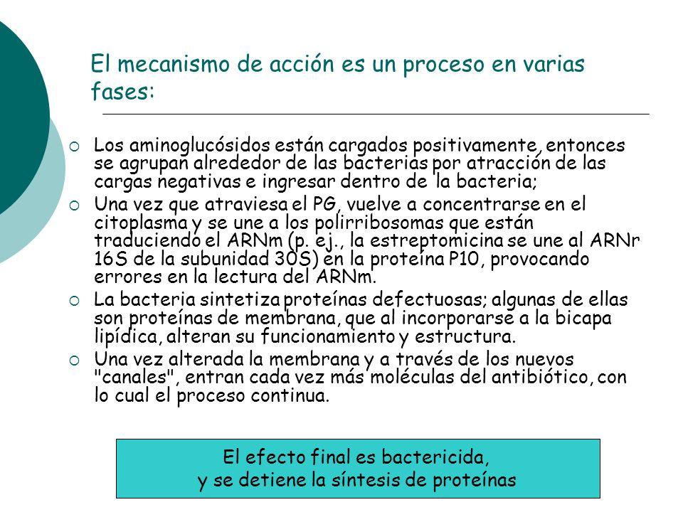 El mecanismo de acción es un proceso en varias fases: