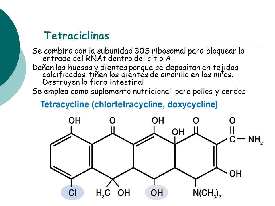 Tetraciclinas Se combina con la subunidad 30S ribosomal para bloquear la entrada del RNAt dentro del sitio A.