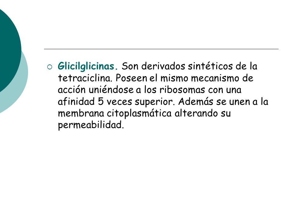 Glicilglicinas. Son derivados sintéticos de la tetraciclina