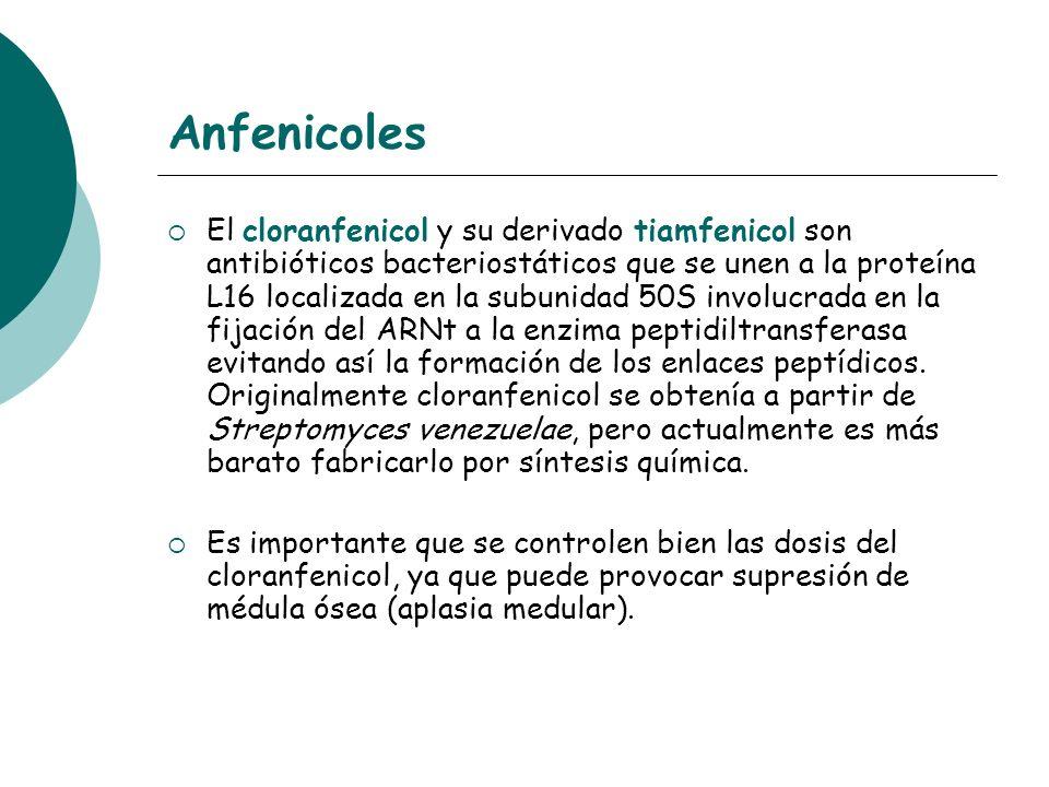 Anfenicoles