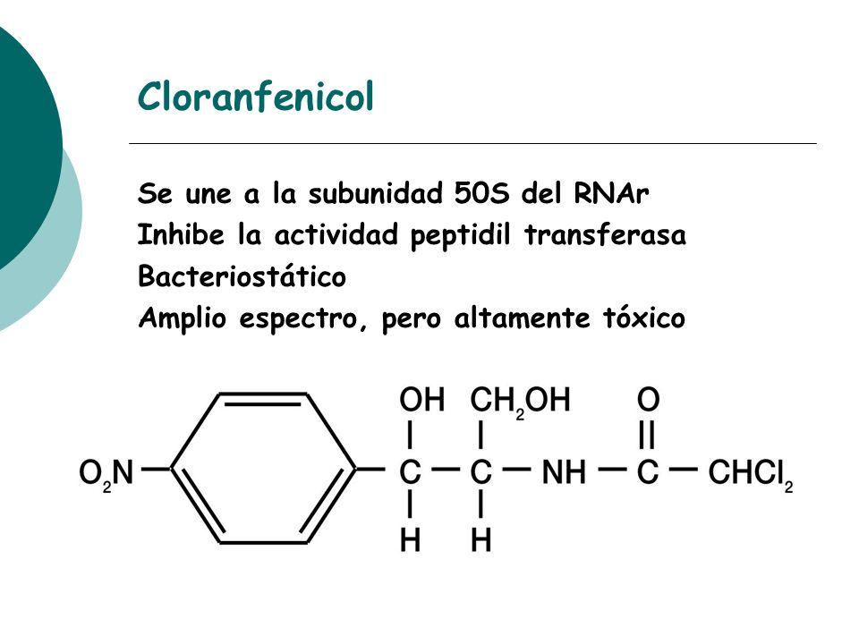 Cloranfenicol Se une a la subunidad 50S del RNAr