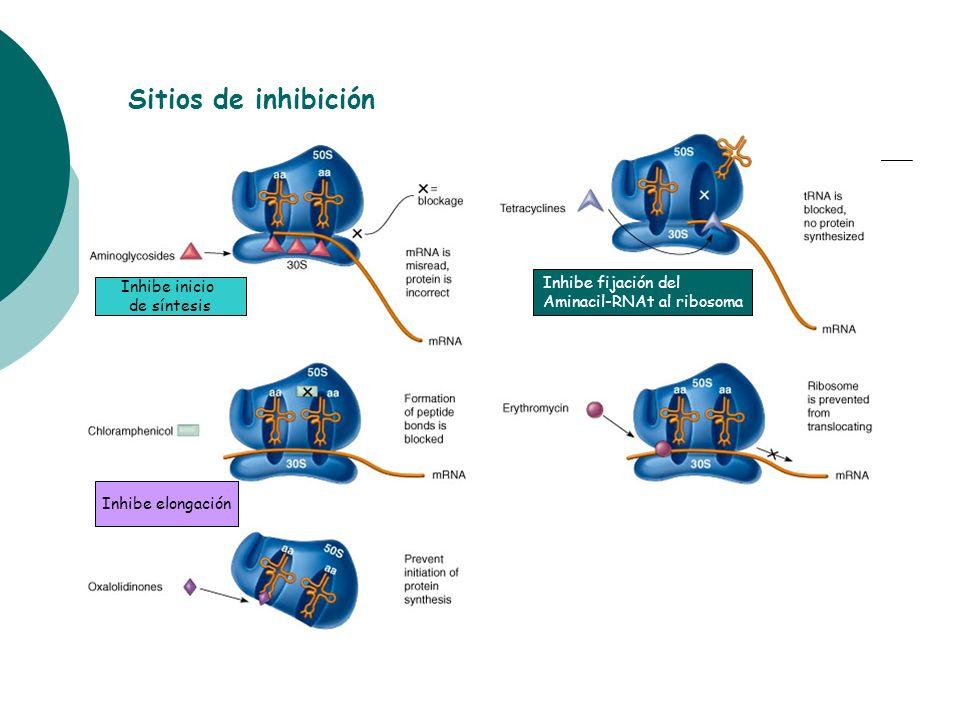 Sitios de inhibición Inhibe fijación del Inhibe inicio