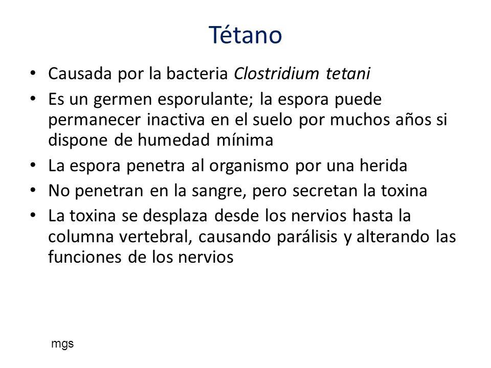 Tétano Causada por la bacteria Clostridium tetani