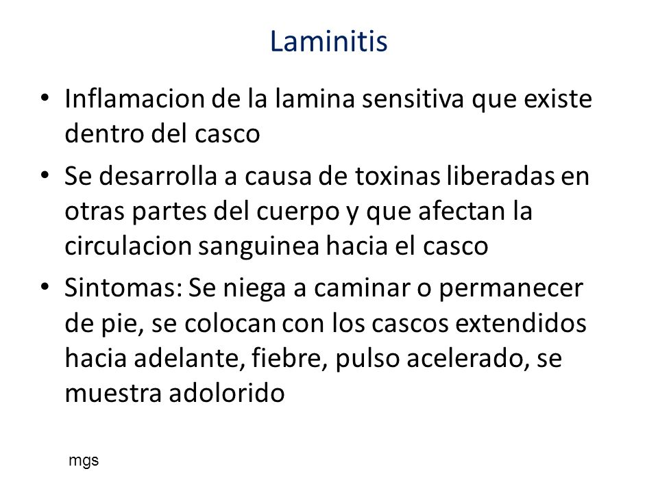 Laminitis Inflamacion de la lamina sensitiva que existe dentro del casco.