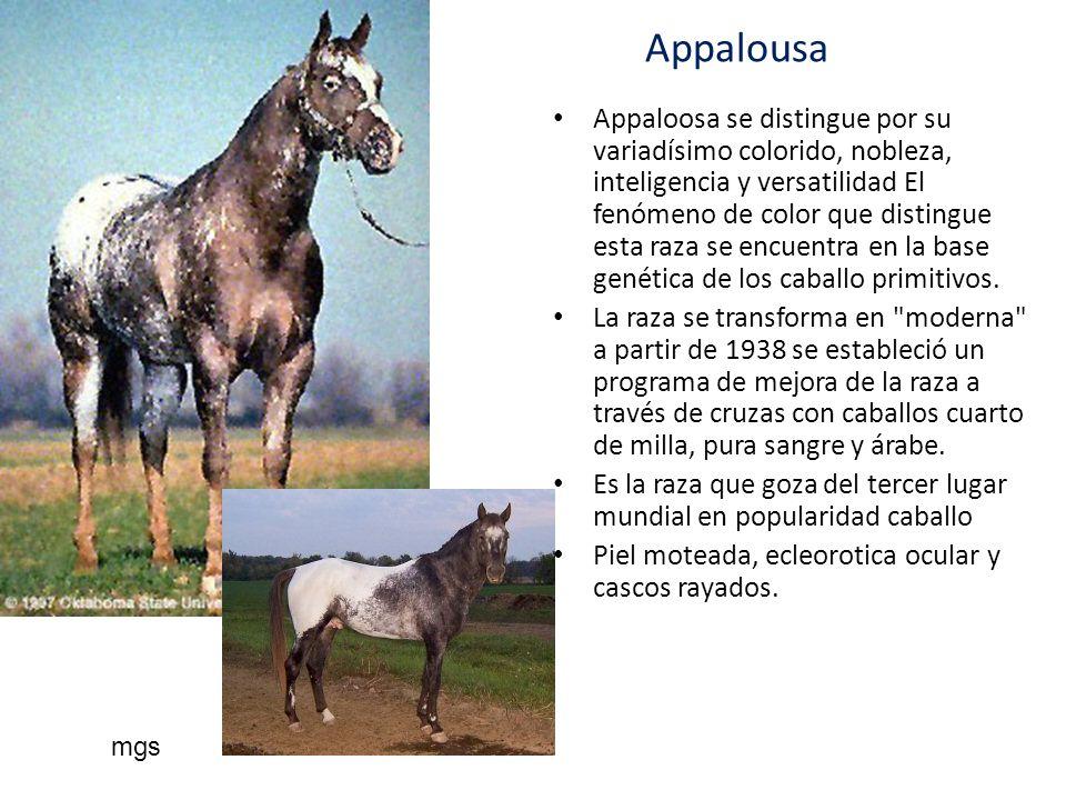 Appalousa