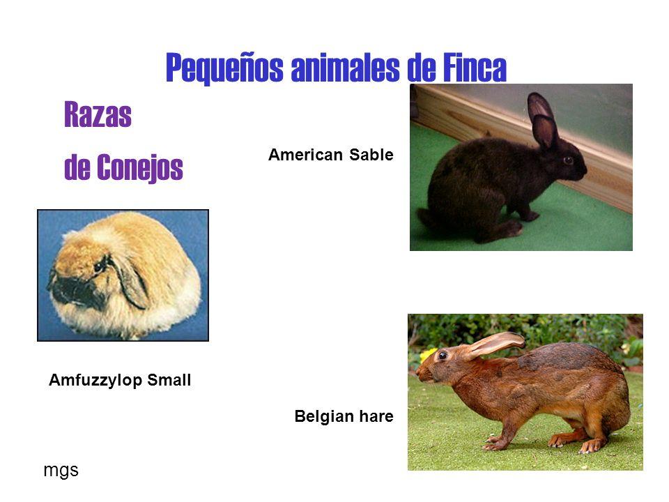Pequeños animales de Finca