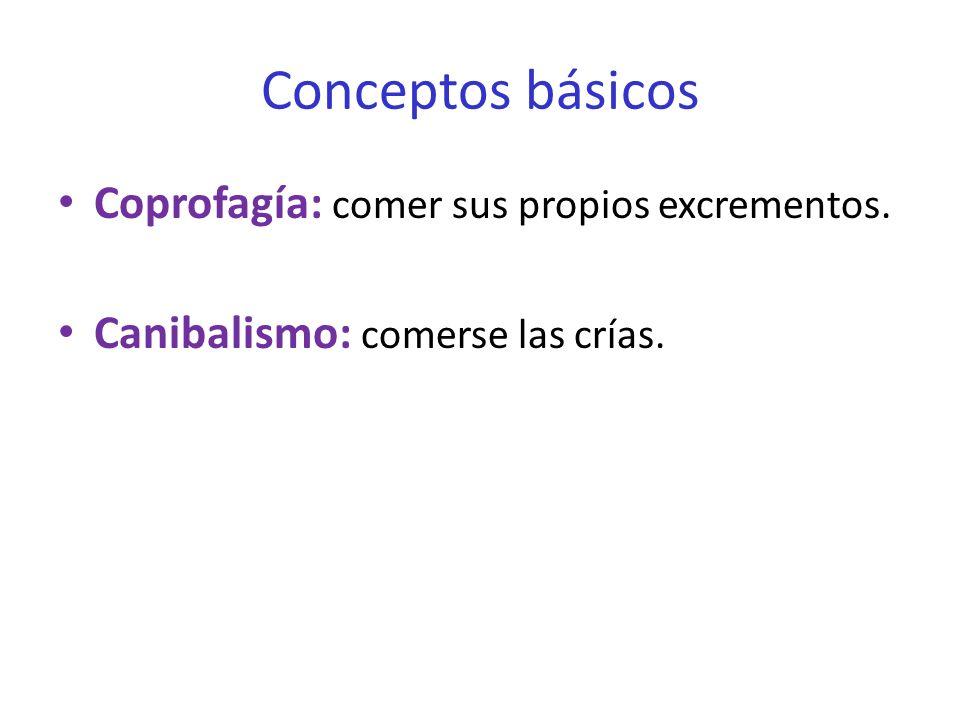 Conceptos básicos Coprofagía: comer sus propios excrementos.