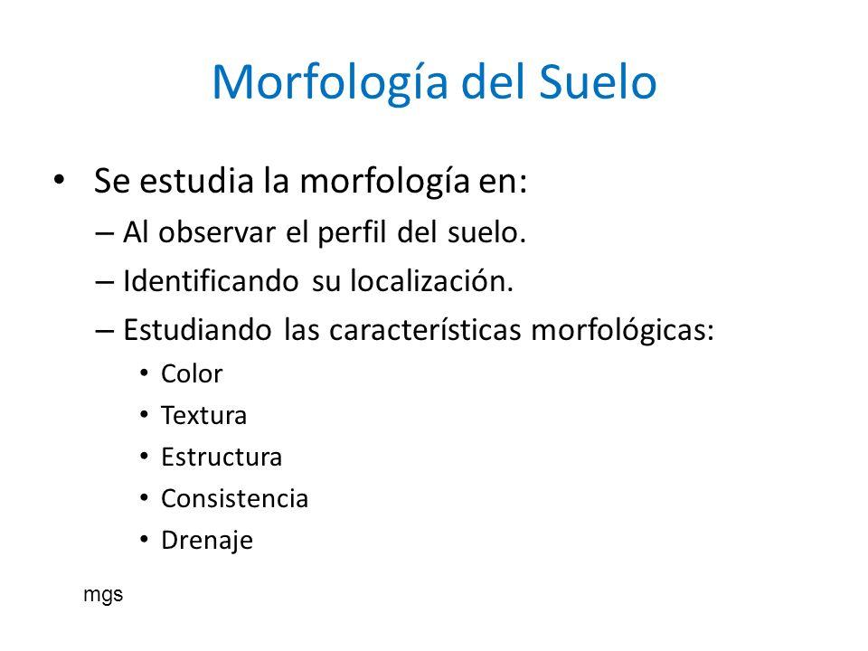 Morfología del Suelo Se estudia la morfología en:
