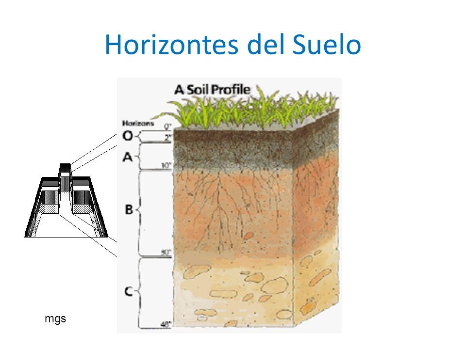 Horizontes del Suelo mgs