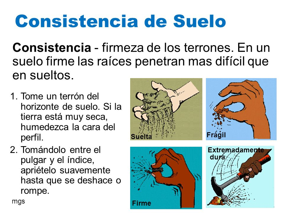 Consistencia de Suelo Consistencia - firmeza de los terrones. En un suelo firme las raíces penetran mas difícil que en sueltos.