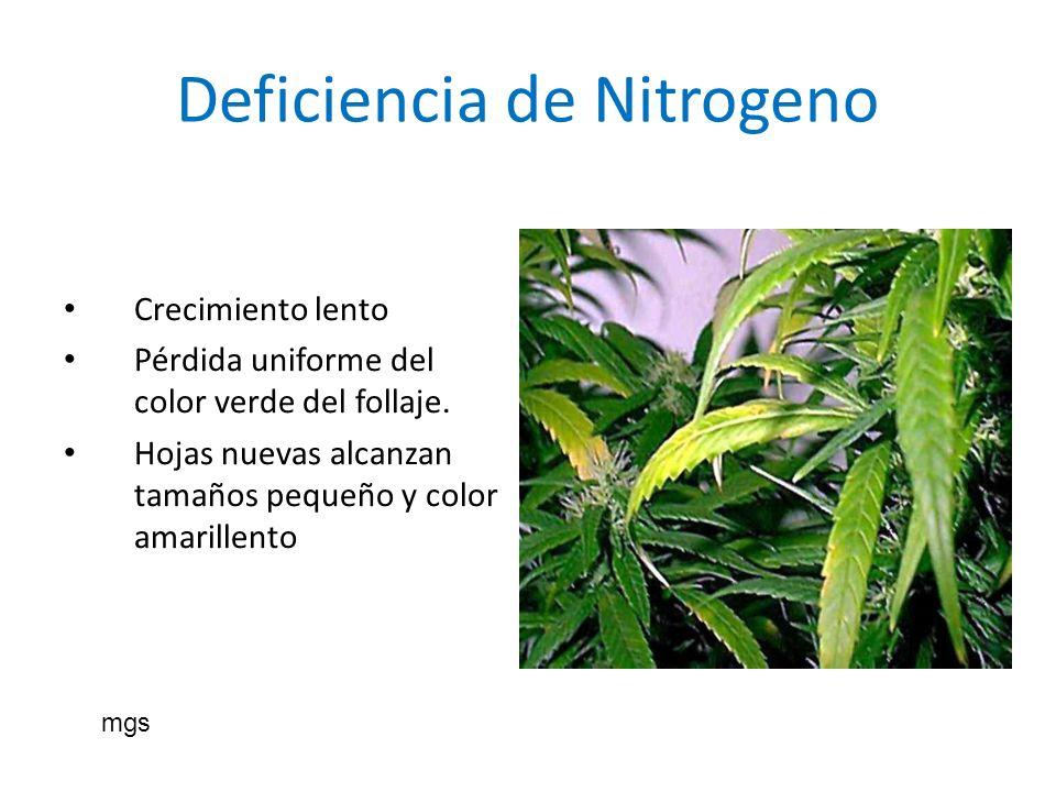 Deficiencia de Nitrogeno