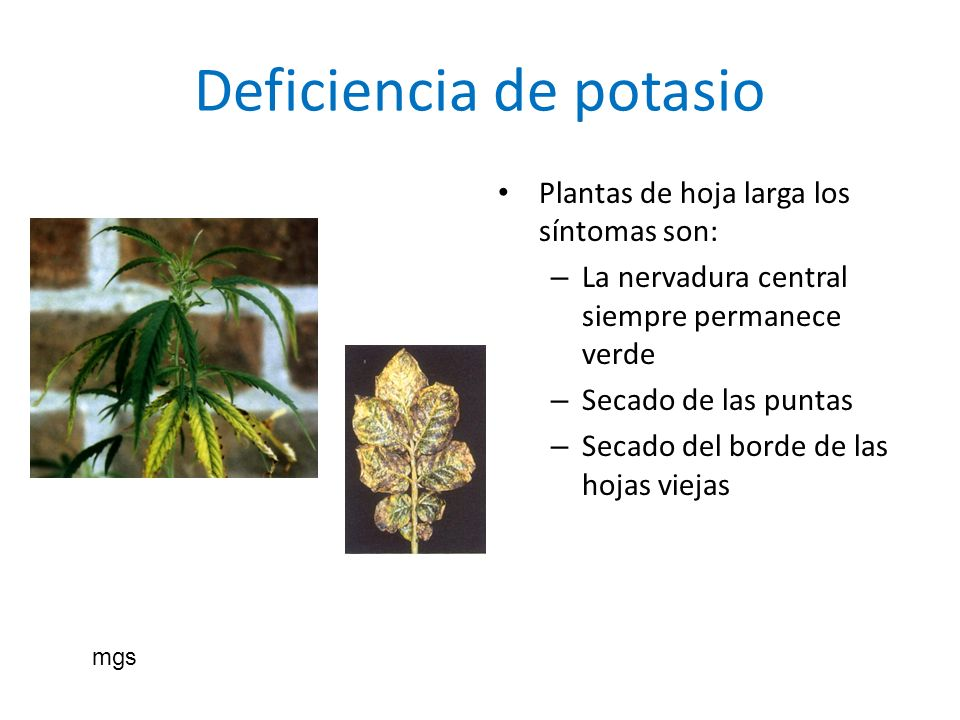 Deficiencia de potasio