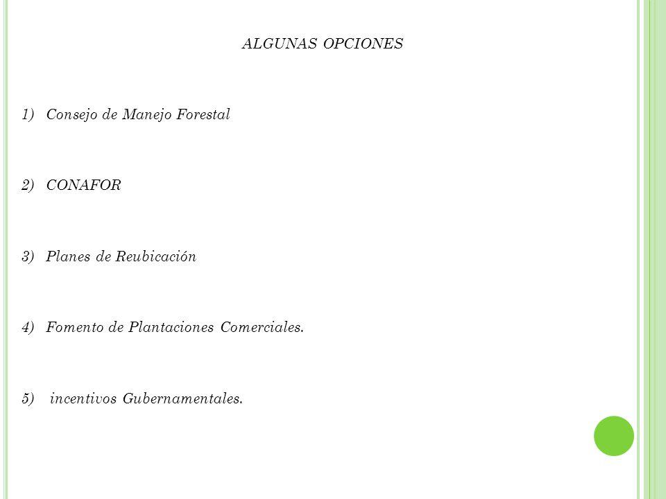 ALGUNAS OPCIONES Consejo de Manejo Forestal. CONAFOR. Planes de Reubicación. Fomento de Plantaciones Comerciales.