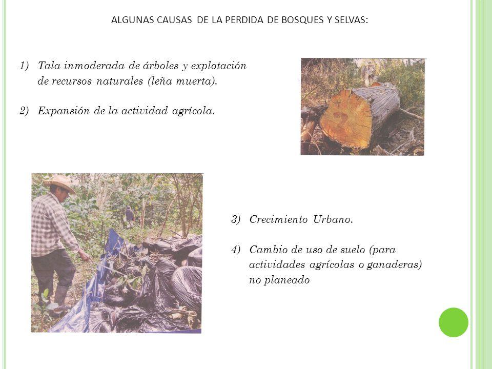 ALGUNAS CAUSAS DE LA PERDIDA DE BOSQUES Y SELVAS: