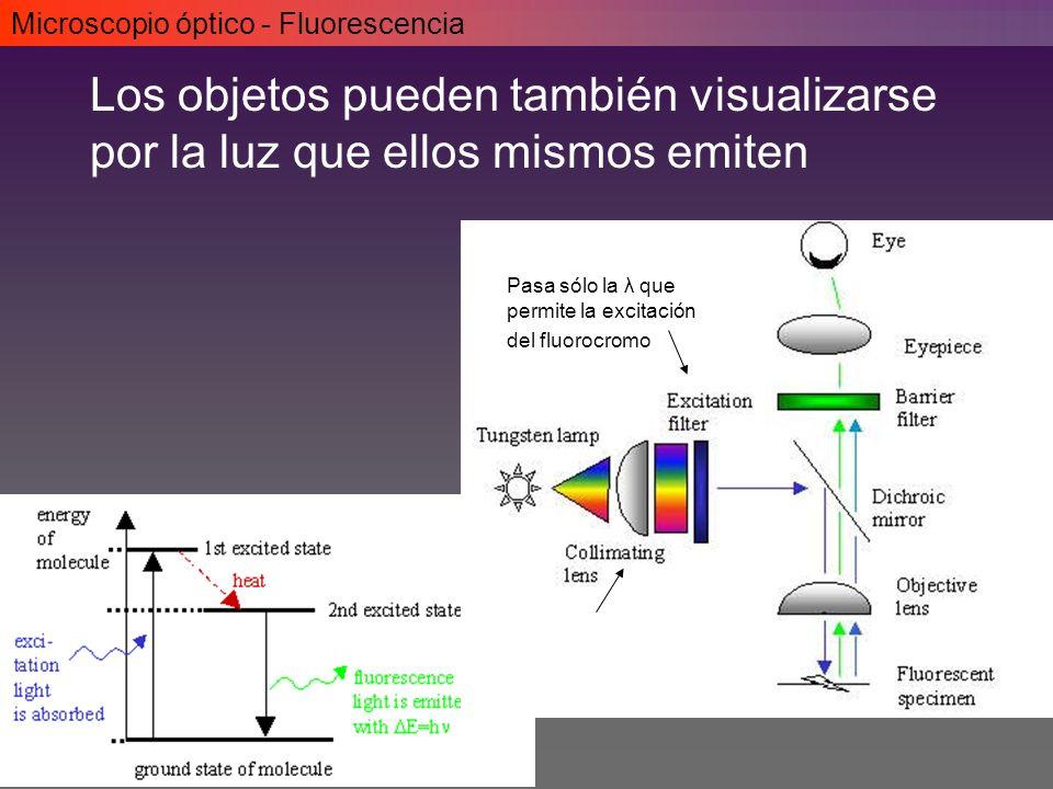 Microscopio óptico - Fluorescencia