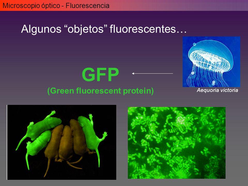 (Green fluorescent protein)