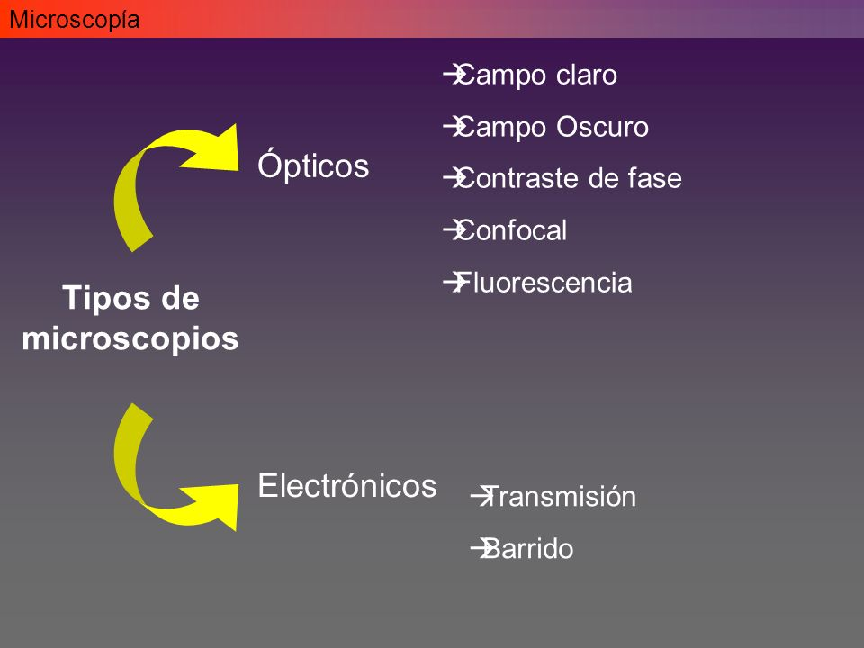 Ópticos Tipos de microscopios Electrónicos Campo claro Campo Oscuro