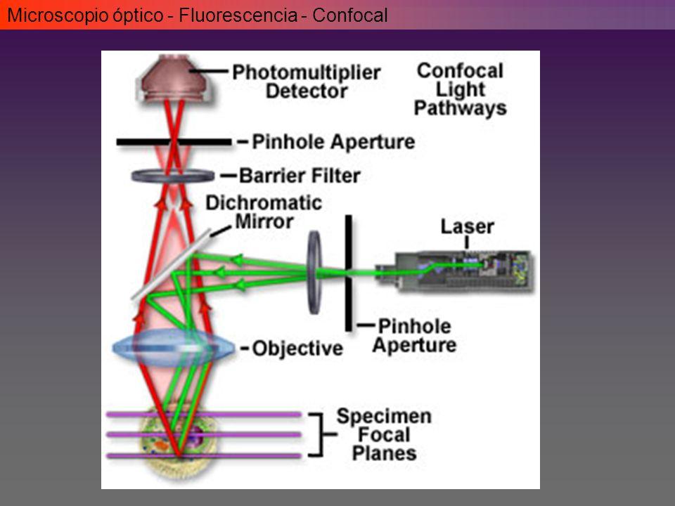 Microscopio óptico - Fluorescencia - Confocal