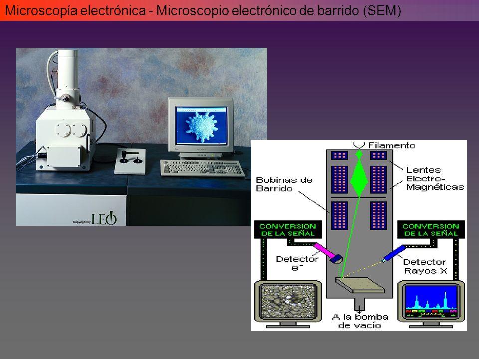 Microscopía electrónica - Microscopio electrónico de barrido (SEM)