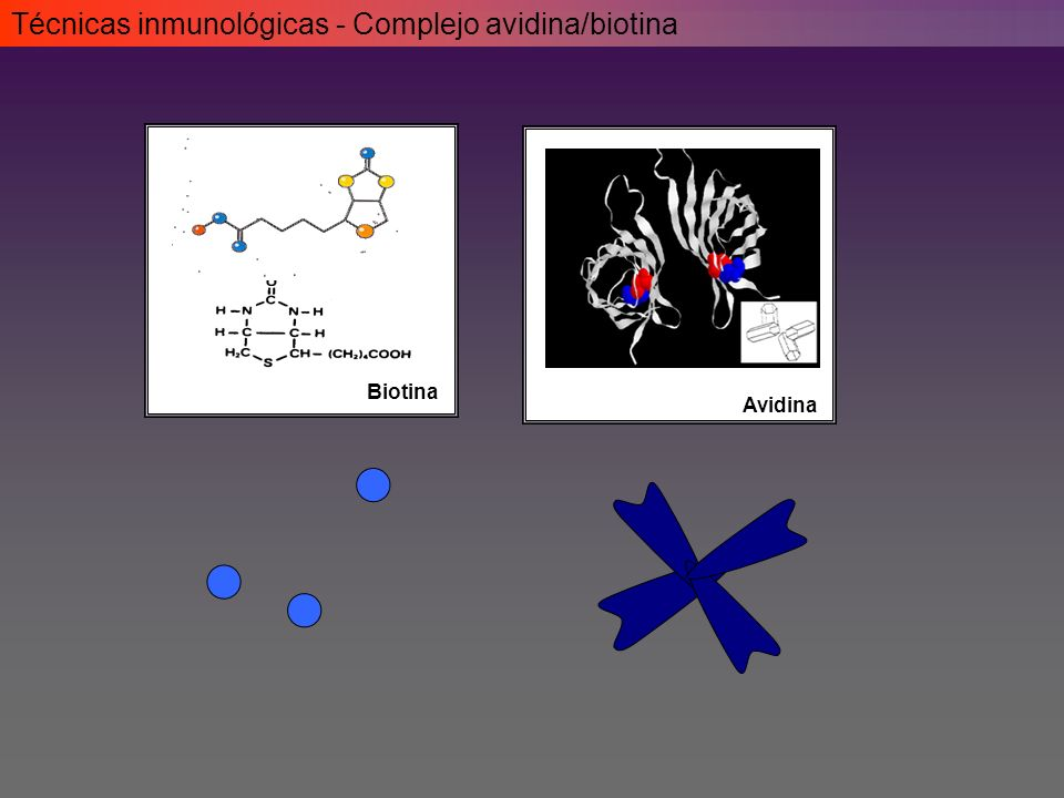 Técnicas inmunológicas - Complejo avidina/biotina