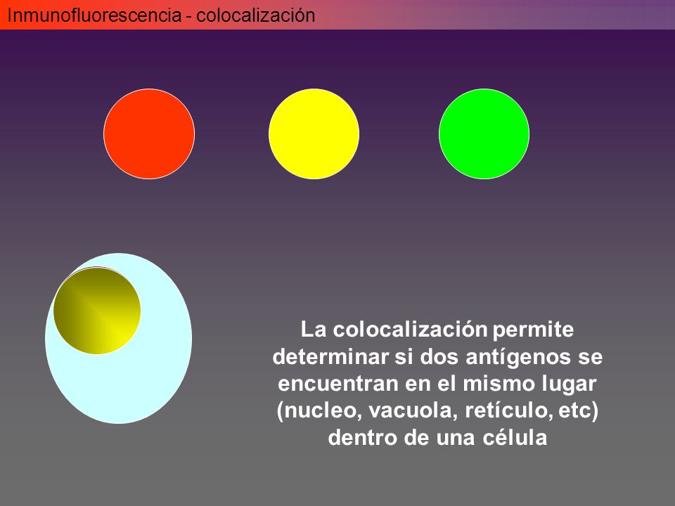 Inmunofluorescencia - colocalización
