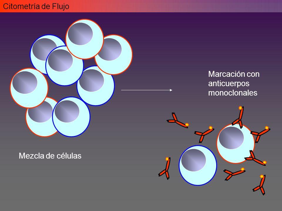 Citometría de Flujo Marcación con anticuerpos monoclonales Mezcla de células
