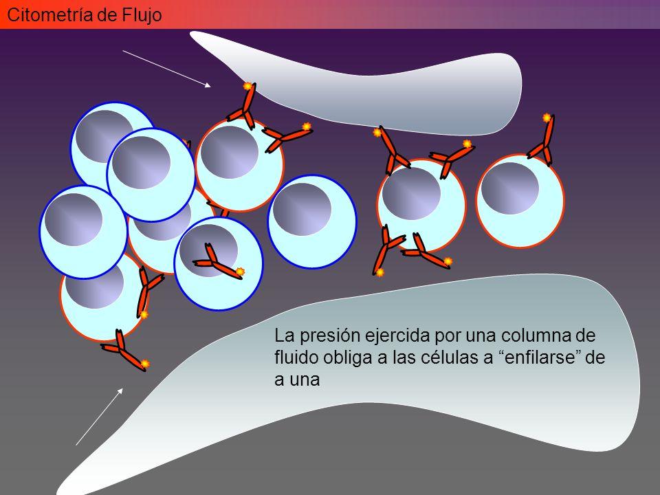 Citometría de Flujo La presión ejercida por una columna de fluido obliga a las células a enfilarse de a una.