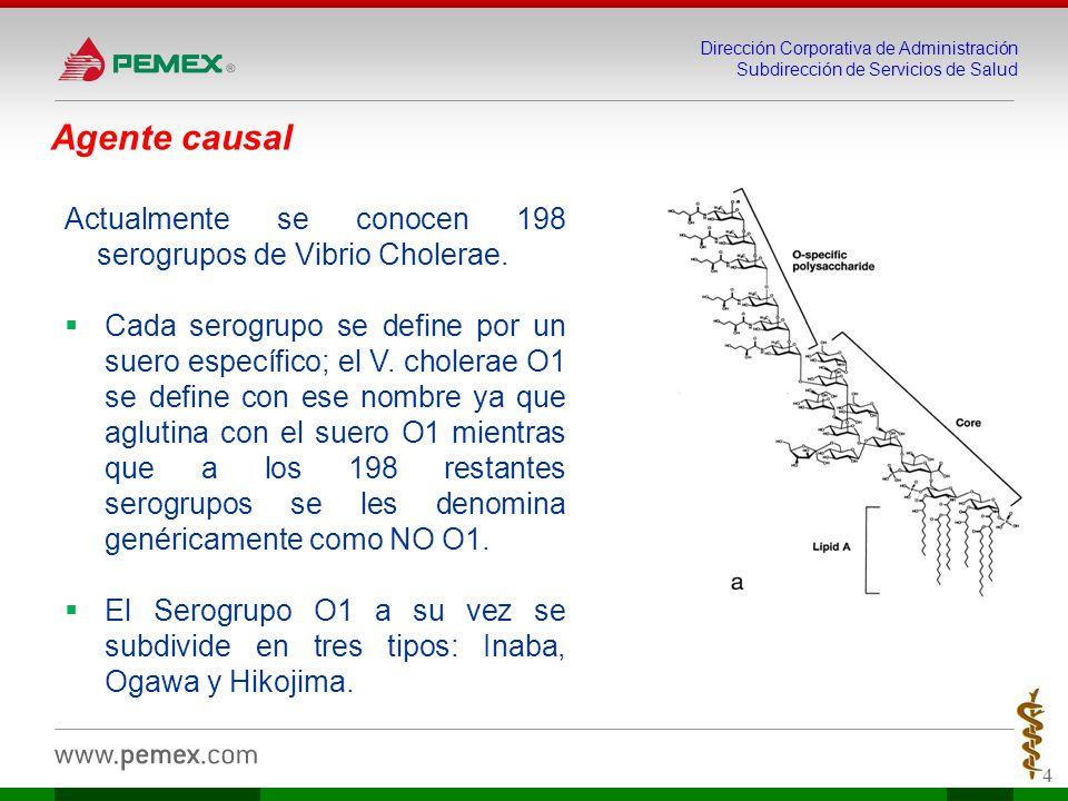 Agente causal Actualmente se conocen 198 serogrupos de Vibrio Cholerae.