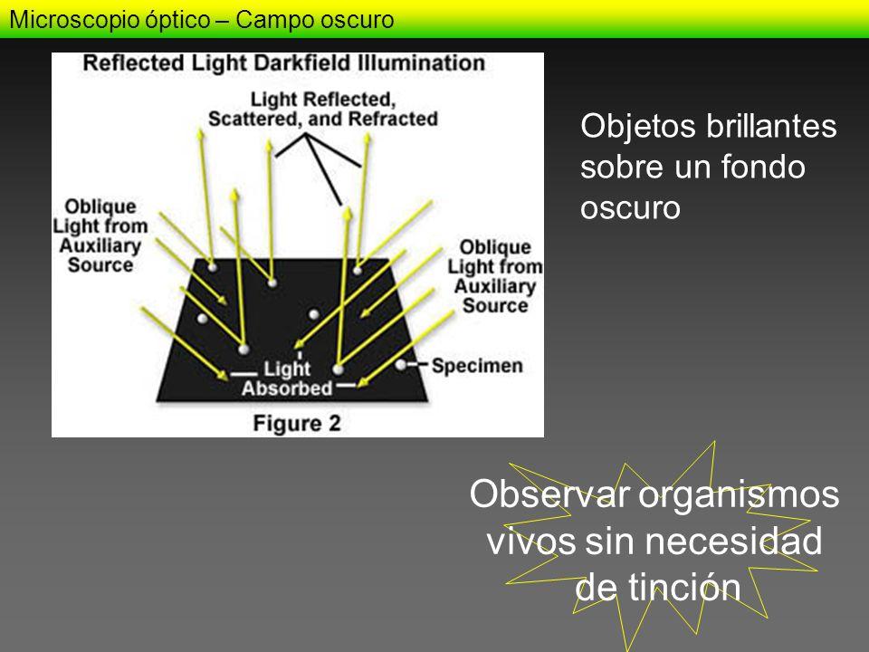 Observar organismos vivos sin necesidad de tinción Objetos brillantes
