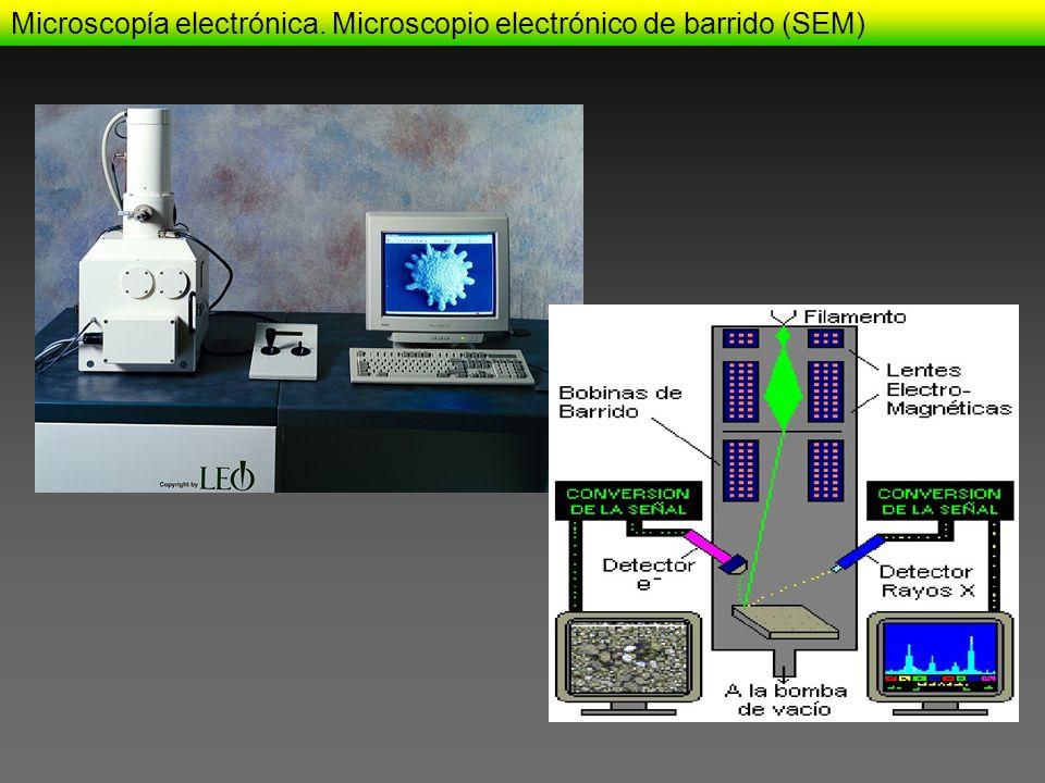 Microscopía electrónica. Microscopio electrónico de barrido (SEM)
