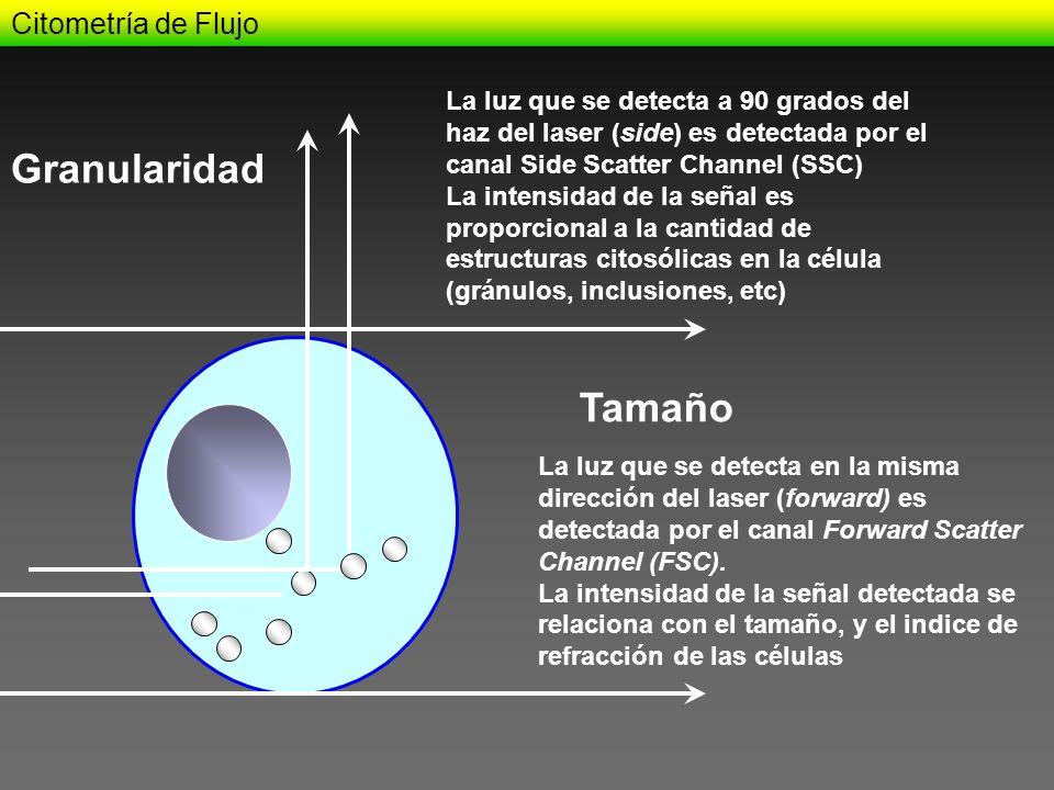 Granularidad Tamaño Citometría de Flujo