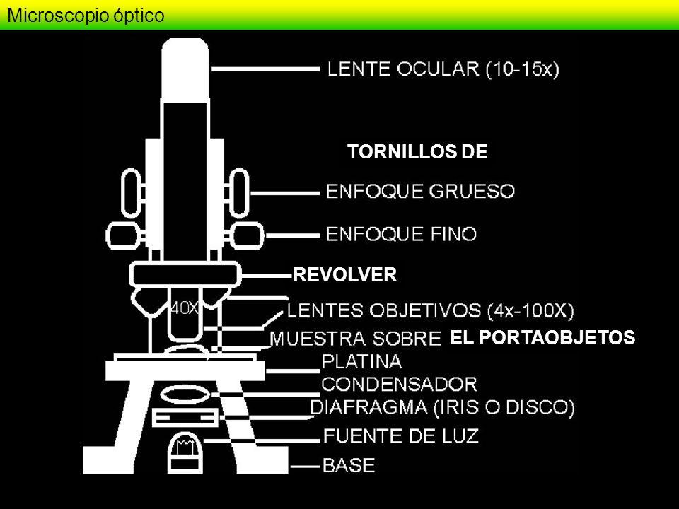 Microscopio óptico TORNILLOS DE REVOLVER EL PORTAOBJETOS