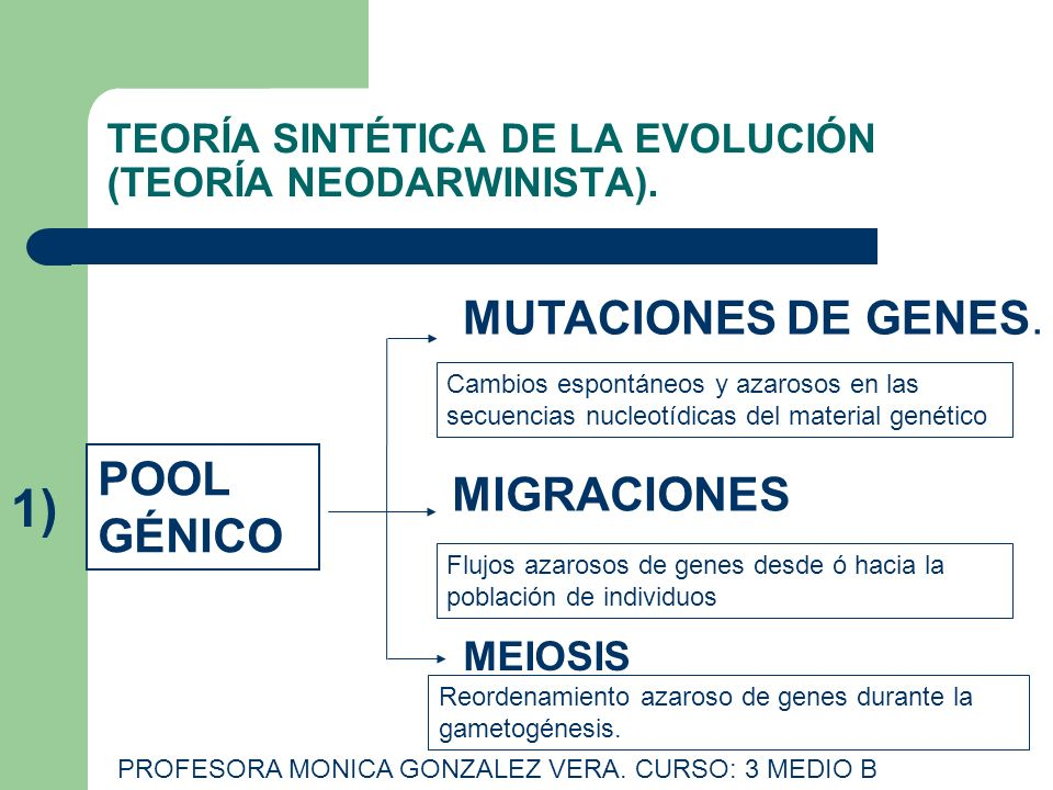 TEORÍA SINTÉTICA DE LA EVOLUCIÓN (TEORÍA NEODARWINISTA).