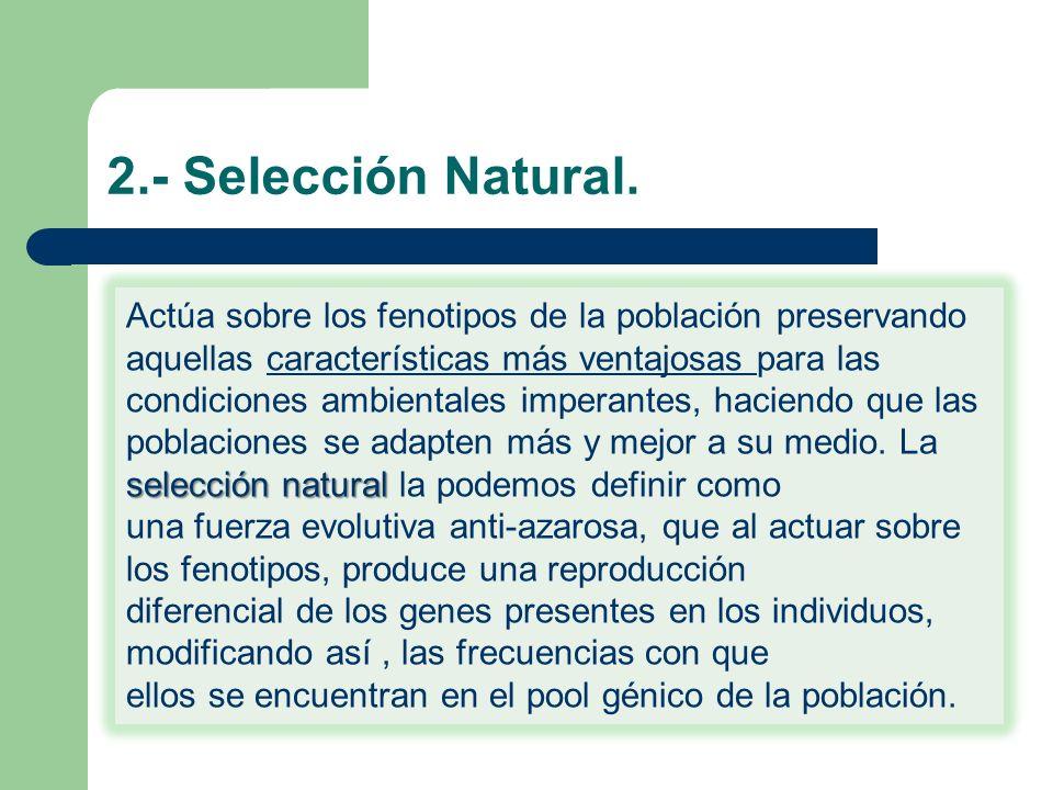2.- Selección Natural.