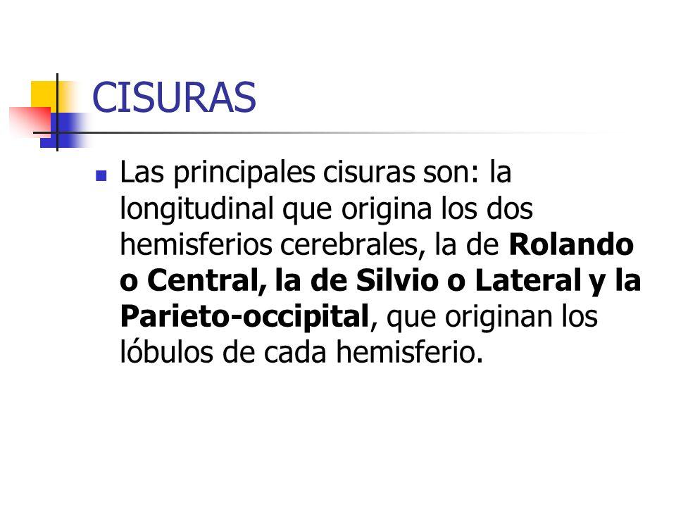 CISURAS
