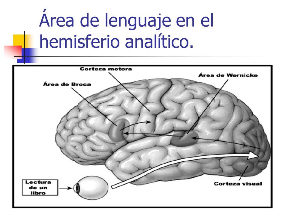 Área de lenguaje en el hemisferio analítico.