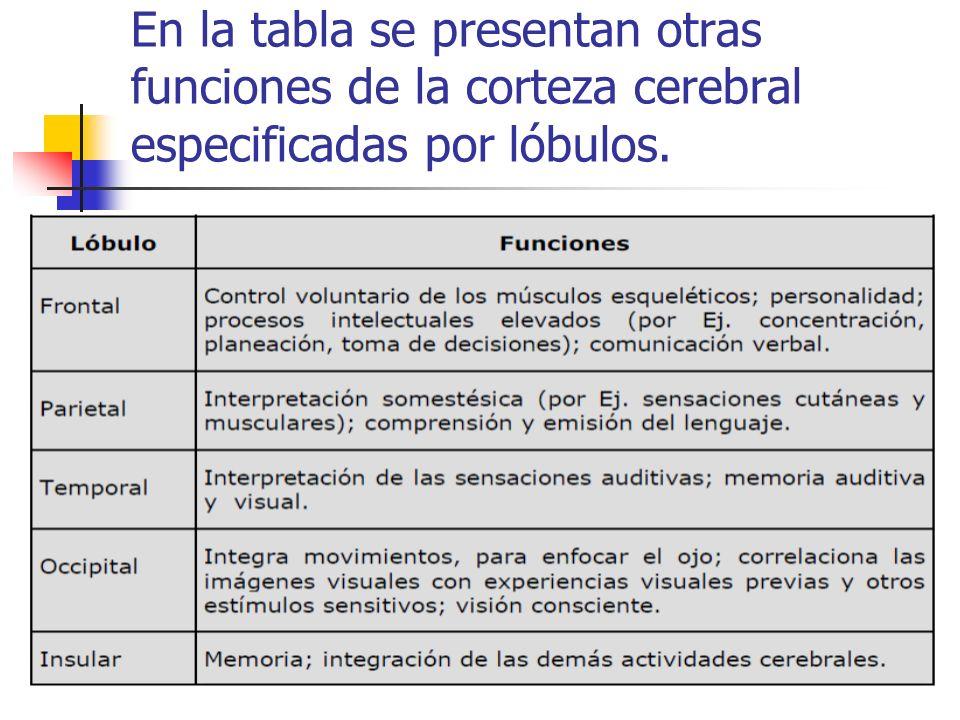 En la tabla se presentan otras funciones de la corteza cerebral especificadas por lóbulos.