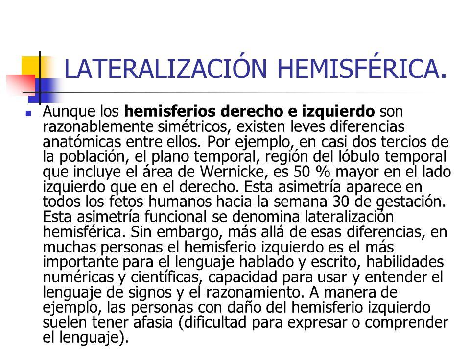 LATERALIZACIÓN HEMISFÉRICA.